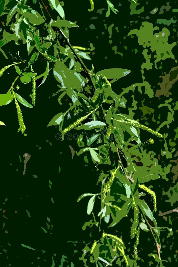 Rami di fioritura 4 del salice illustrazione di stock