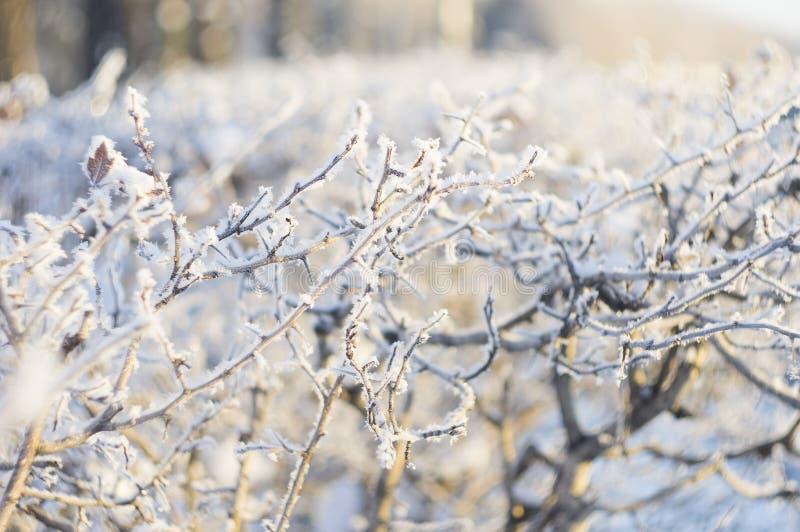 Rami di inverno fotografia stock libera da diritti