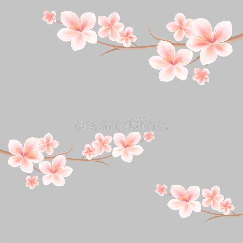 Rami di sakura con i fiori bianchi rosa-chiaro su fondo grigio chiaro fiori dell'Apple-albero Cherry Blossom Vettore illustrazione vettoriale