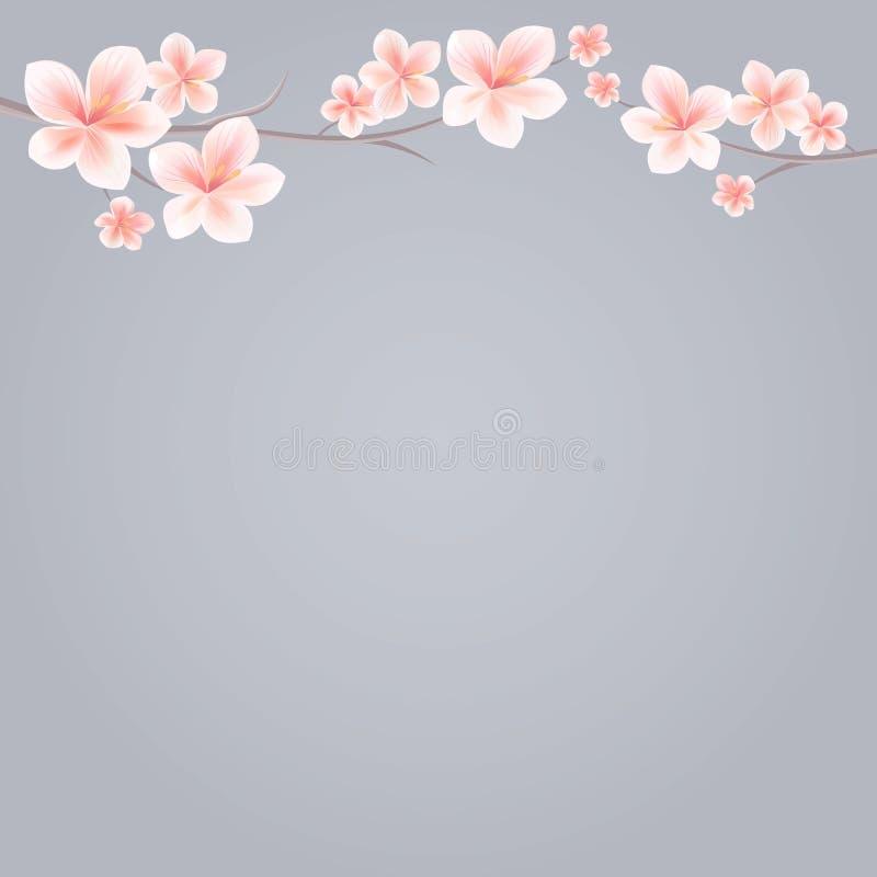 Rami di Sakura con i fiori rosa isolati su fondo grigio Fiori di Sakura Cherry Blossom Cmyk di vettore ENV 10 royalty illustrazione gratis