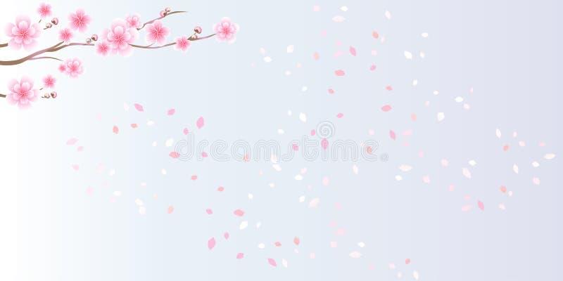 Rami di sakura Petali del fiore e di volo di ciliegia isolati sopra illustrazione vettoriale