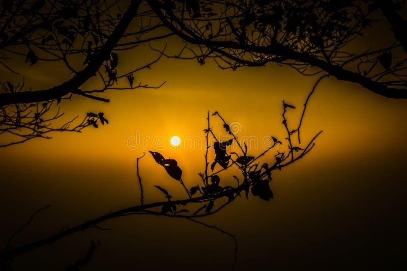 Rami di tramonto fotografie stock