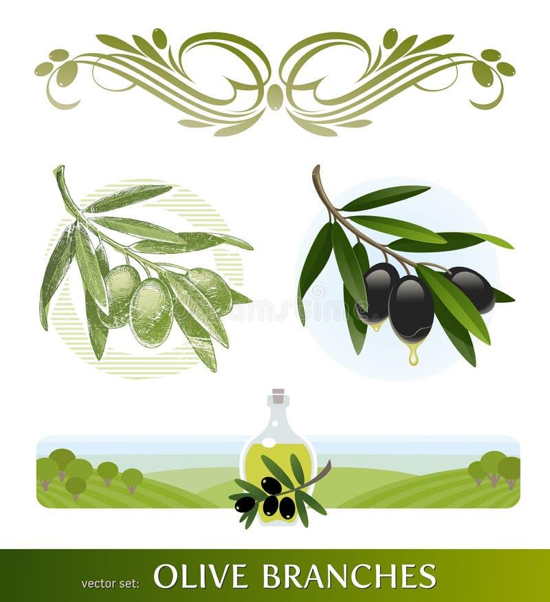 Rami di ulivo ed olio illustrazione di stock