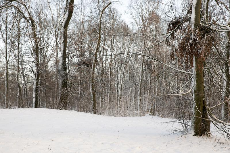 Rami di un albero nella neve immagini stock