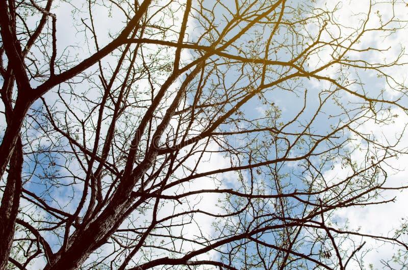 Rami di un albero senza foglie immagini stock libere da diritti