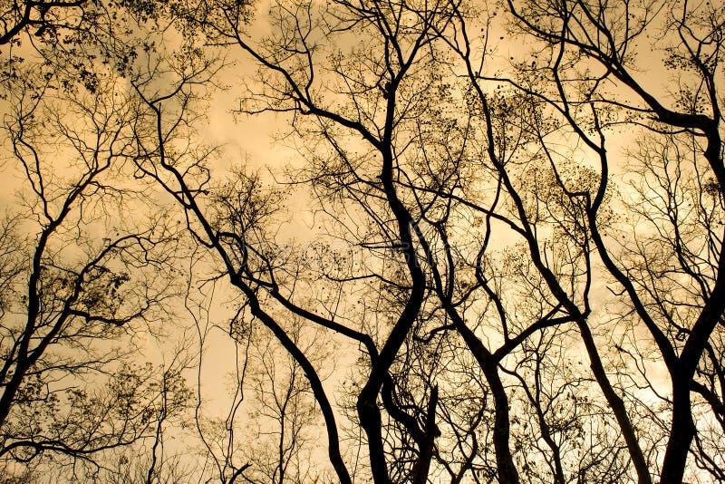 Rami di un albero senza foglie in primavera del cielo arancio fotografie stock
