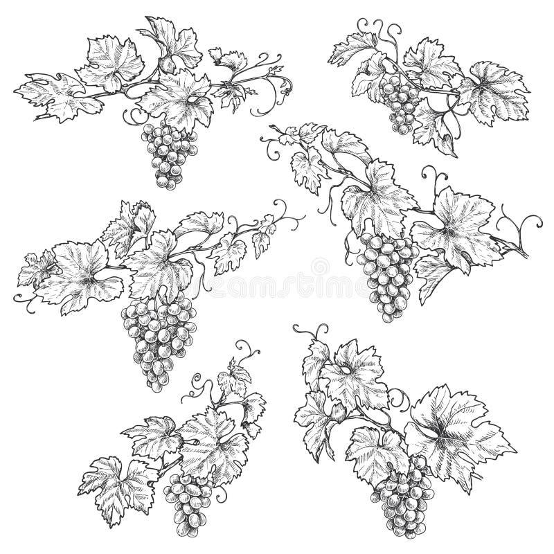 Rami disegnati a mano dell'uva illustrazione di stock