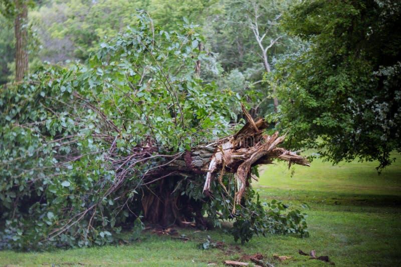 Rami ed alberi di albero rotti dopo un uragano fotografie stock