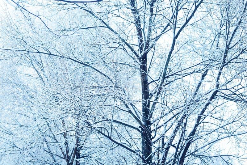 Rami innevati degli alberi fotografie stock libere da diritti