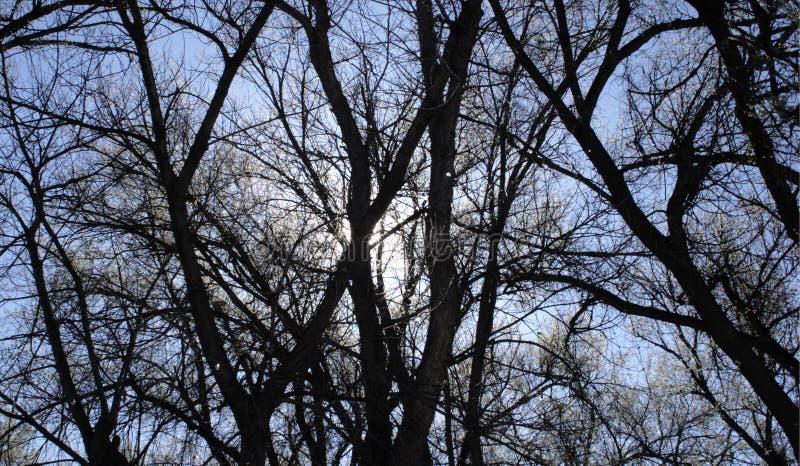 Rami nudi degli alberi contro il cielo fotografia stock