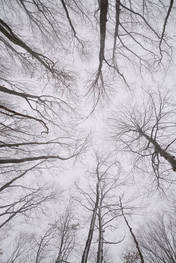 Rami nudi degli alberi nella foresta di inverno fotografia stock