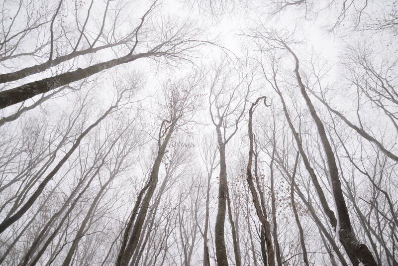Rami nudi degli alberi nella foresta di inverno immagini stock