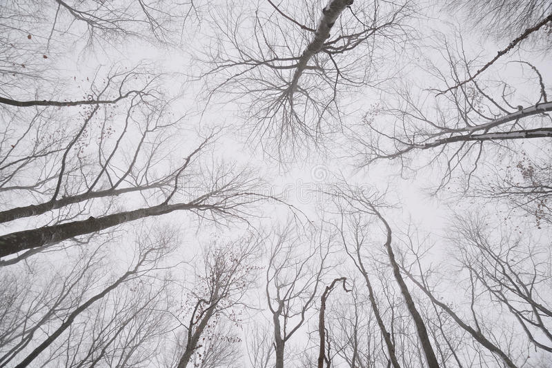 Rami nudi degli alberi nella foresta di inverno fotografia stock libera da diritti