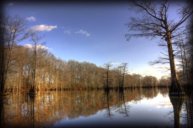 Rami paludosi di fiume calmi fotografia stock libera da diritti