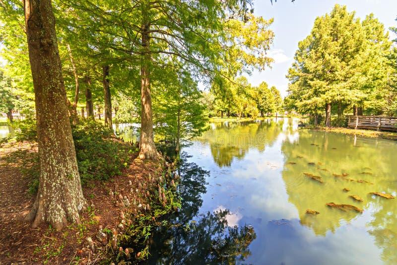 Rami paludosi di fiume della Luisiana immagini stock libere da diritti