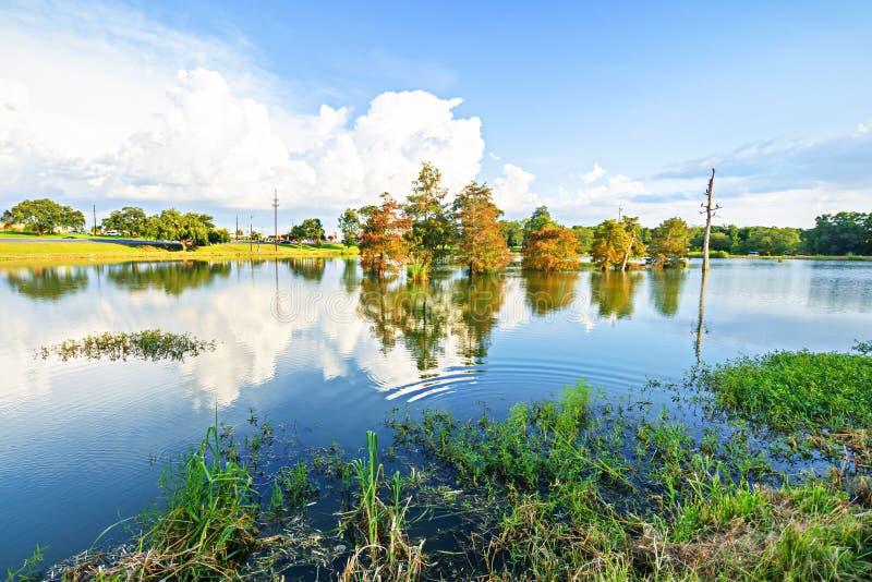 Rami paludosi di fiume della Luisiana fotografia stock libera da diritti