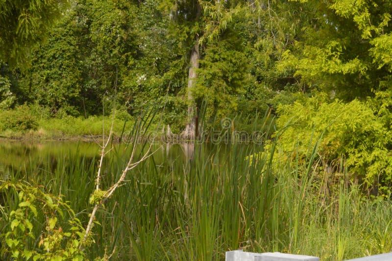 Rami paludosi di fiume e paludi immagini stock