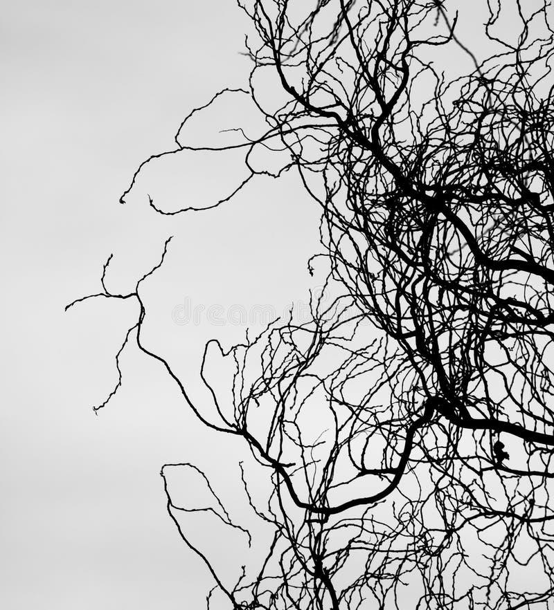 Rami senza foglie fotografia stock libera da diritti