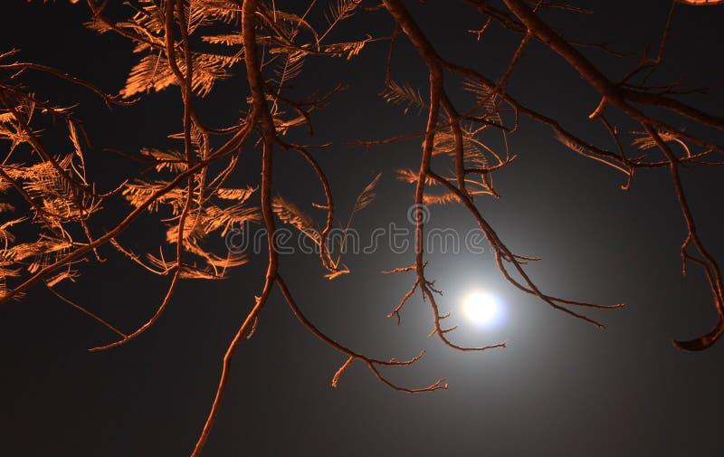 Rami terrificanti sopra la luna immagini stock