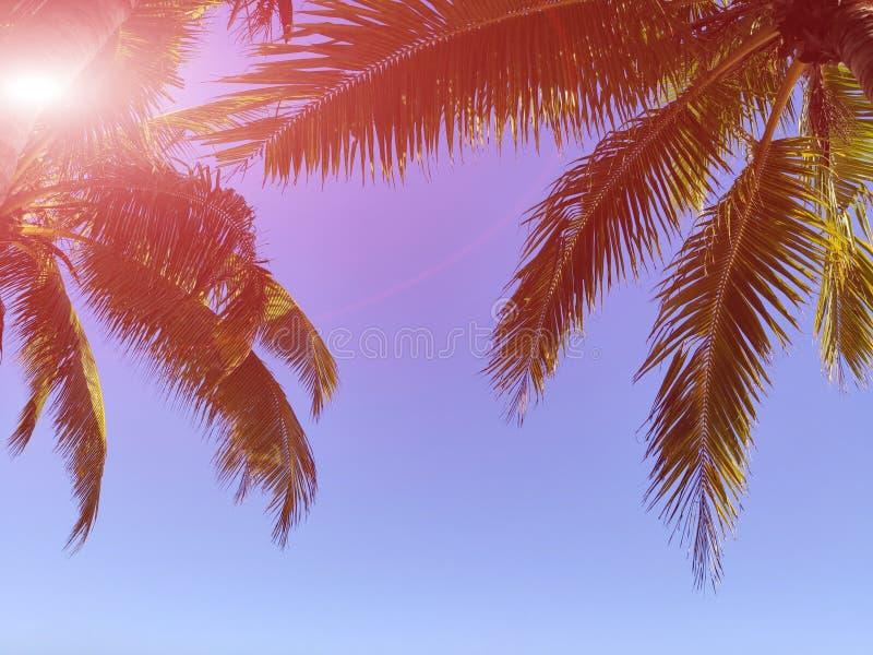 Rami tropicali della palma sul mare con il cielo immagine stock