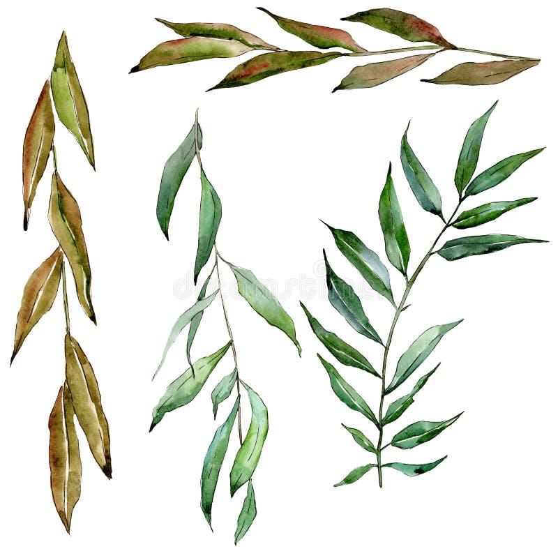 Rami verdi del salice Insieme dell'illustrazione del fondo dell'acquerello Elemento isolato dell'illustrazione del ramo royalty illustrazione gratis