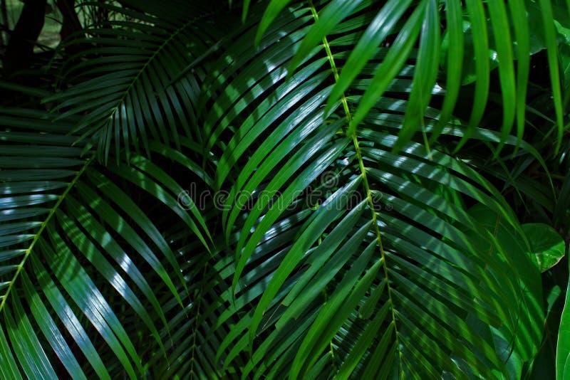 Ramifica a folha tropical Sunny Green Saturated Background fotos de stock
