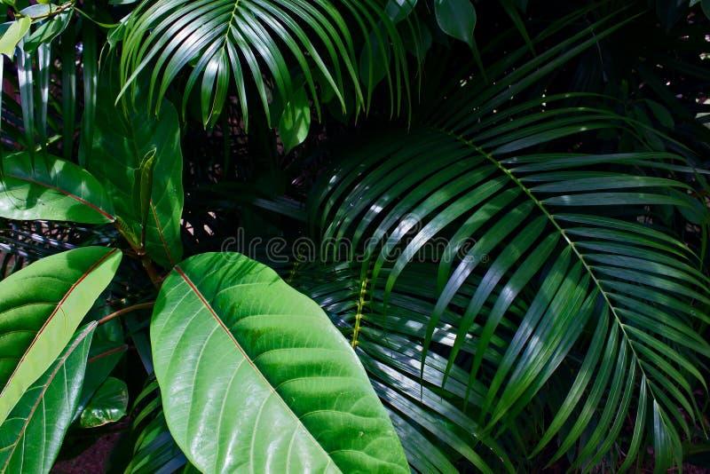 Ramifica a folha tropical Sunny Green Saturated Background imagem de stock