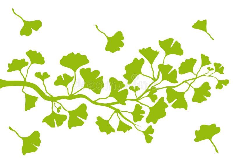Ramificación con las hojas, vector del Ginkgo