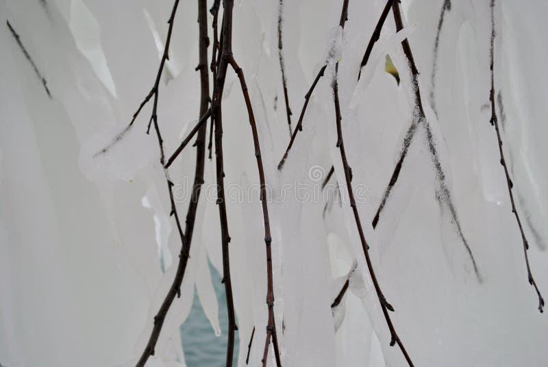 Ramificación congelada fotografía de archivo