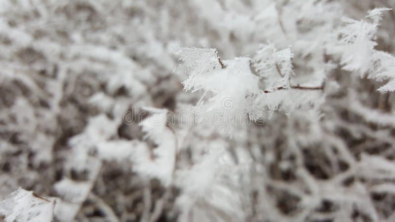 Ramificación congelada imagen de archivo libre de regalías