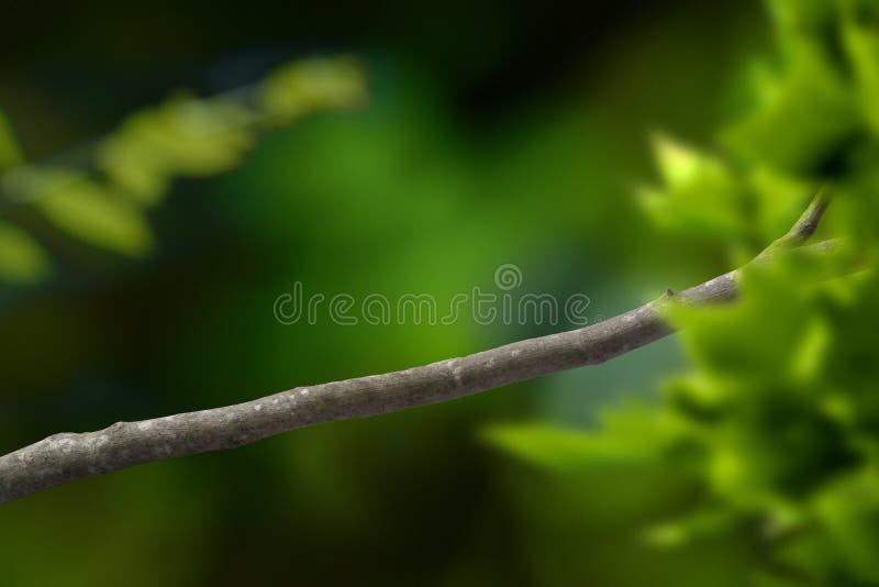 Ramificación de árbol foto de archivo libre de regalías