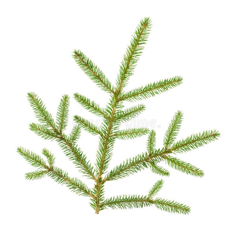 Ramificación de árbol de navidad fotografía de archivo