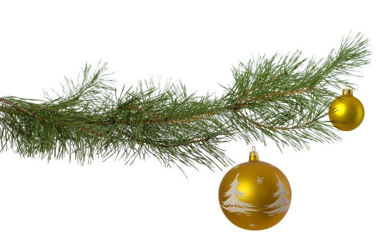 Ramificación de la Navidad con dos chucherías de oro imágenes de archivo libres de regalías