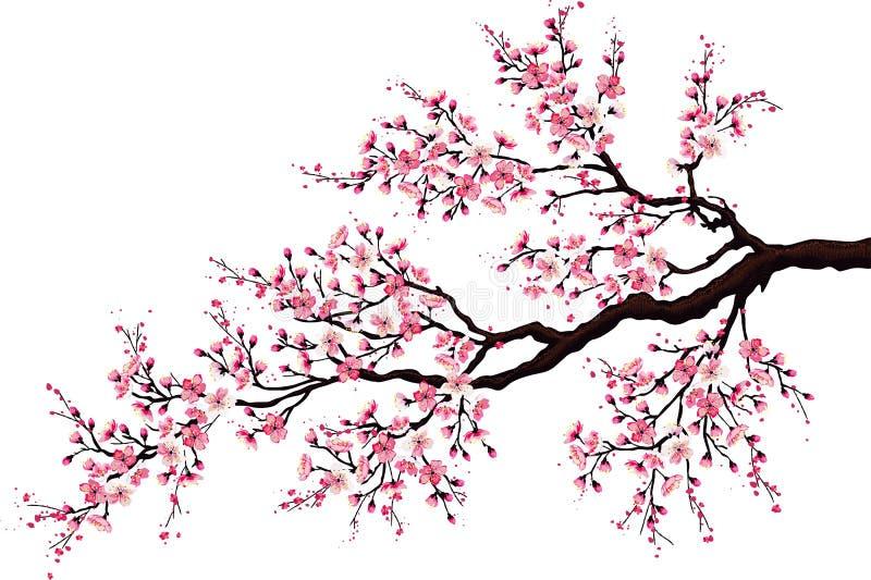 Ramificación de una cereza floreciente stock de ilustración