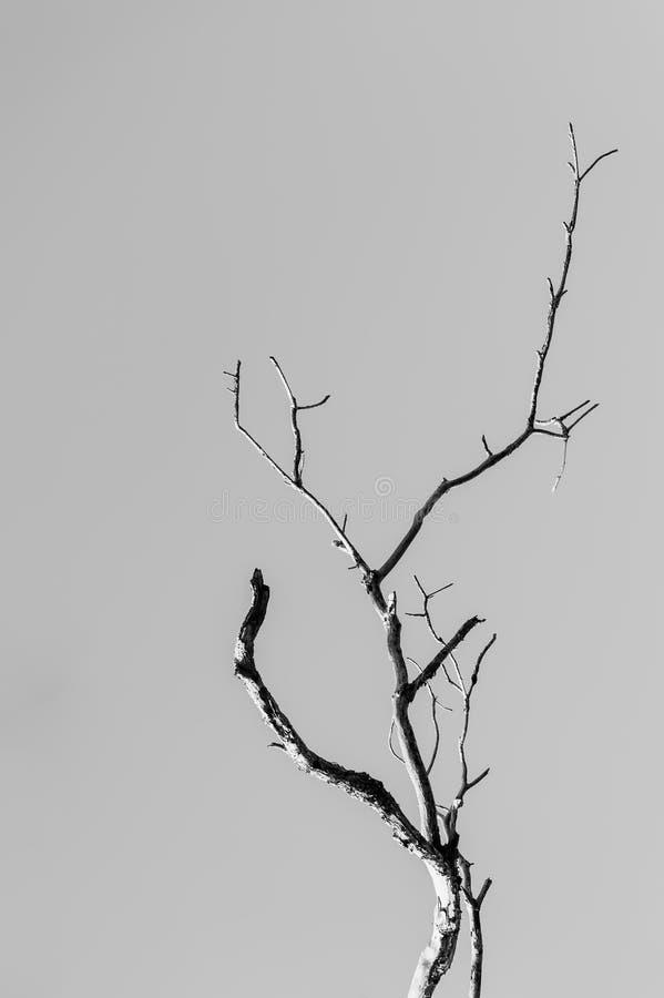 Ramificación del árbol foto de archivo libre de regalías