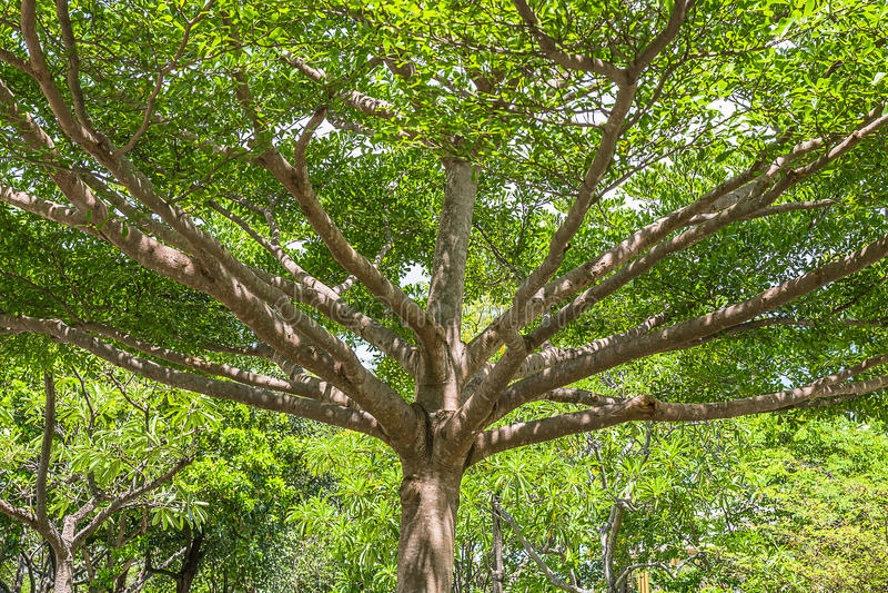 Ramificación del árbol imagenes de archivo