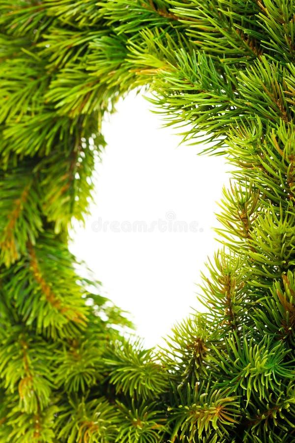 Ramificación del árbol de navidad imagen de archivo