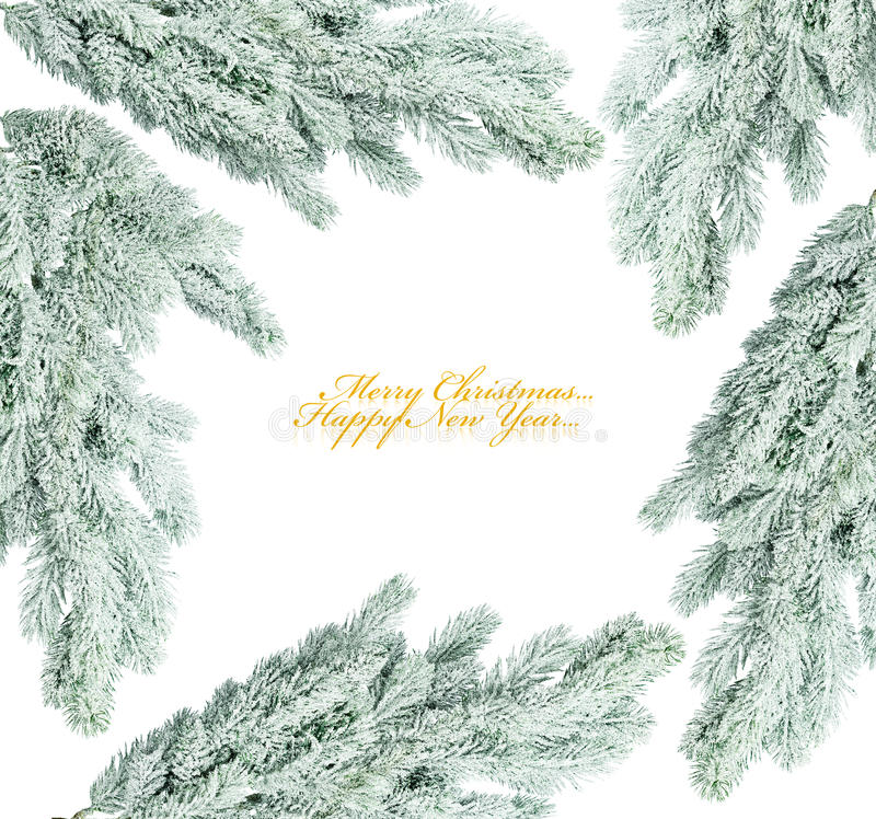Ramificación del árbol de navidad imagen de archivo libre de regalías
