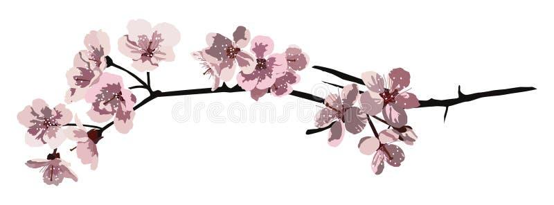 Ramificación del flor de cereza stock de ilustración