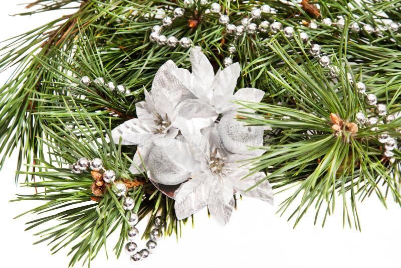 Ramificación verde del pino con la composición de la Navidad fotografía de archivo libre de regalías