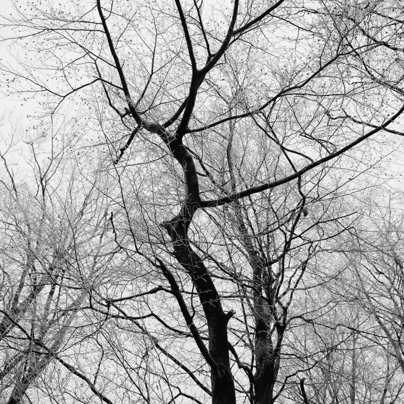 Ramificaciones de árbol abstractas fotos de archivo libres de regalías