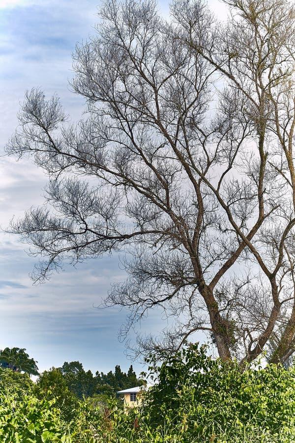 Ramificaciones de árbol con las hojas con nublado fotografía de archivo libre de regalías