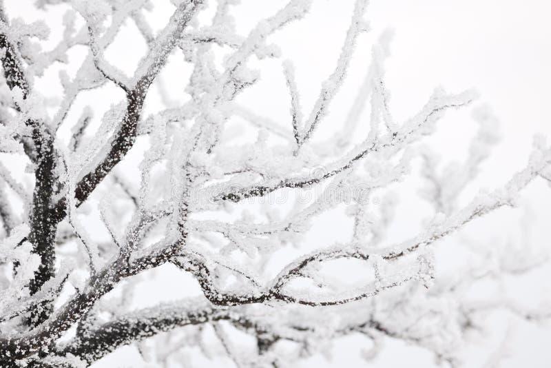 Ramificaciones de árbol congeladas imagen de archivo