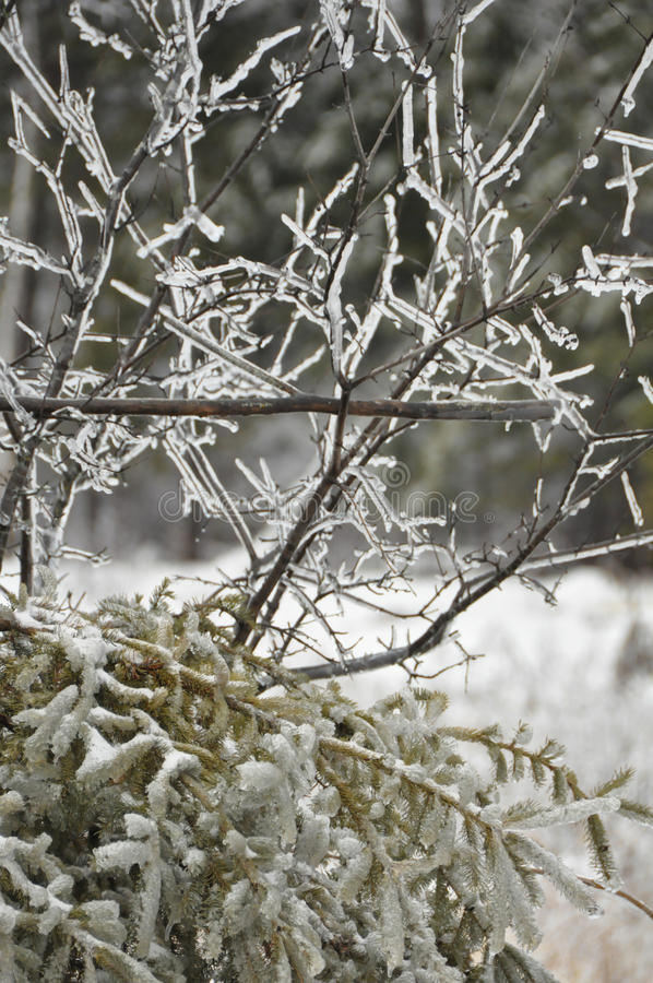 Ramificaciones de árbol heladas imagen de archivo libre de regalías