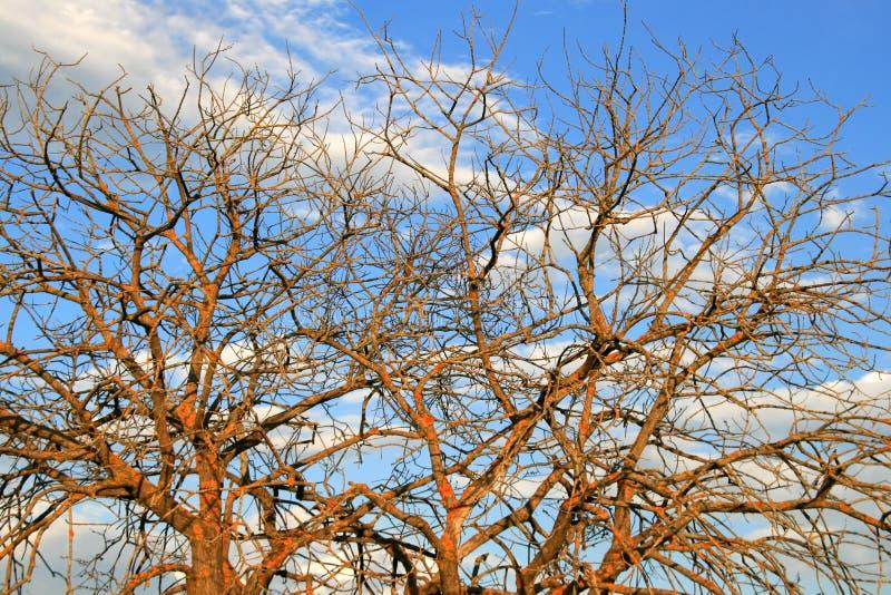 Ramificaciones de un árbol sin las hojas contra el cielo imagen de archivo libre de regalías