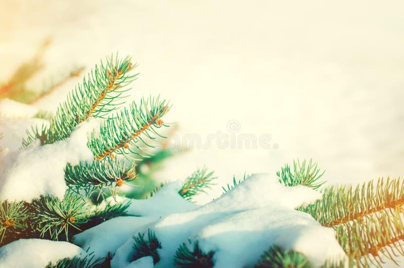 Ramificaciones del árbol de navidad Árbol de navidad en la nieve en un soleado imagen de archivo