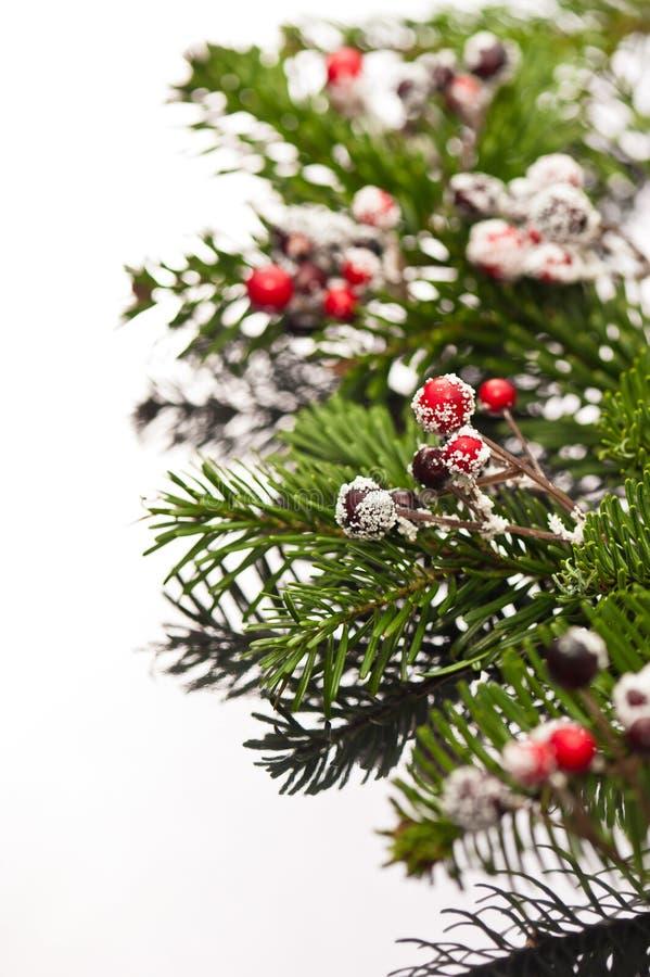 Ramificaciones del acebo y del árbol de navidad fotografía de archivo