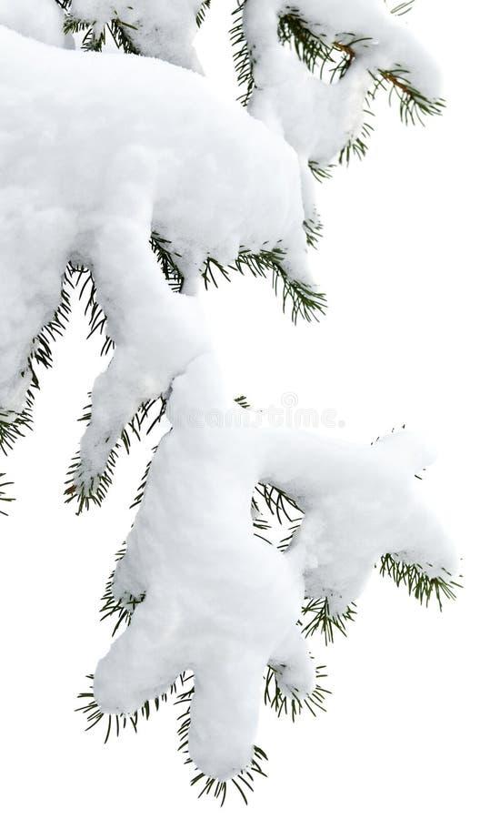 Ramificaciones del invierno imagenes de archivo