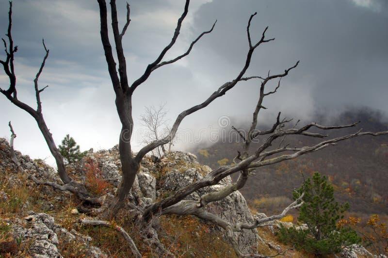 Ramificaciones misteriosas del árbol muerto imágenes de archivo libres de regalías