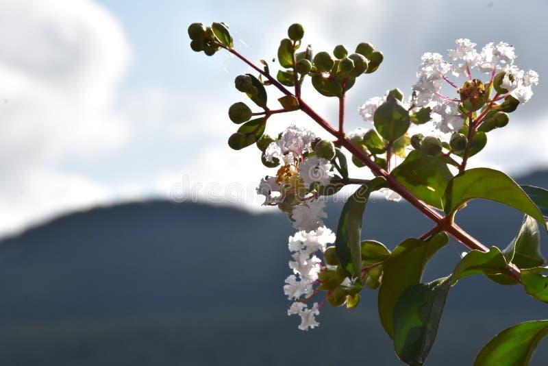 Ramifichi con i fiori bianchi fotografia stock